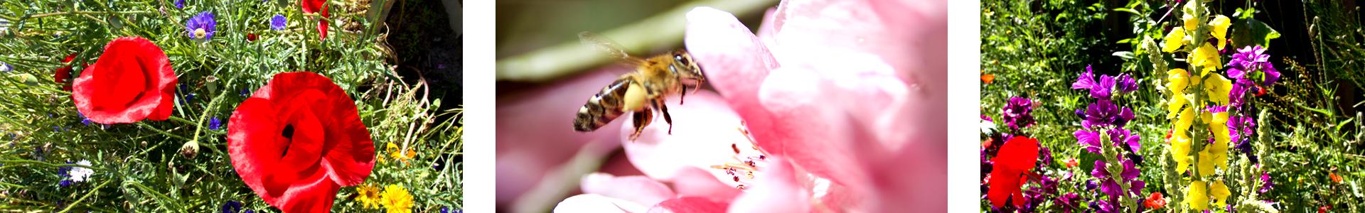 Bienenbeete_triplet