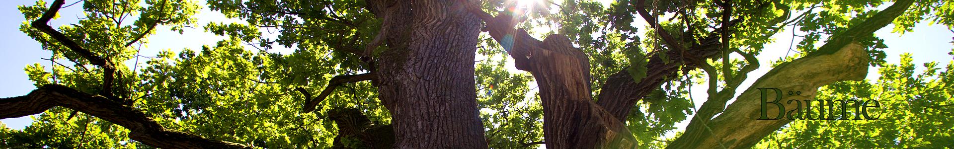 Header_Bäume