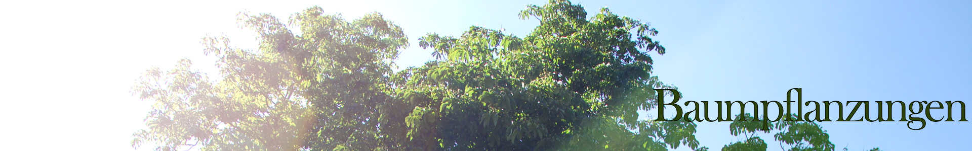 Header_Baumpflanzungen2