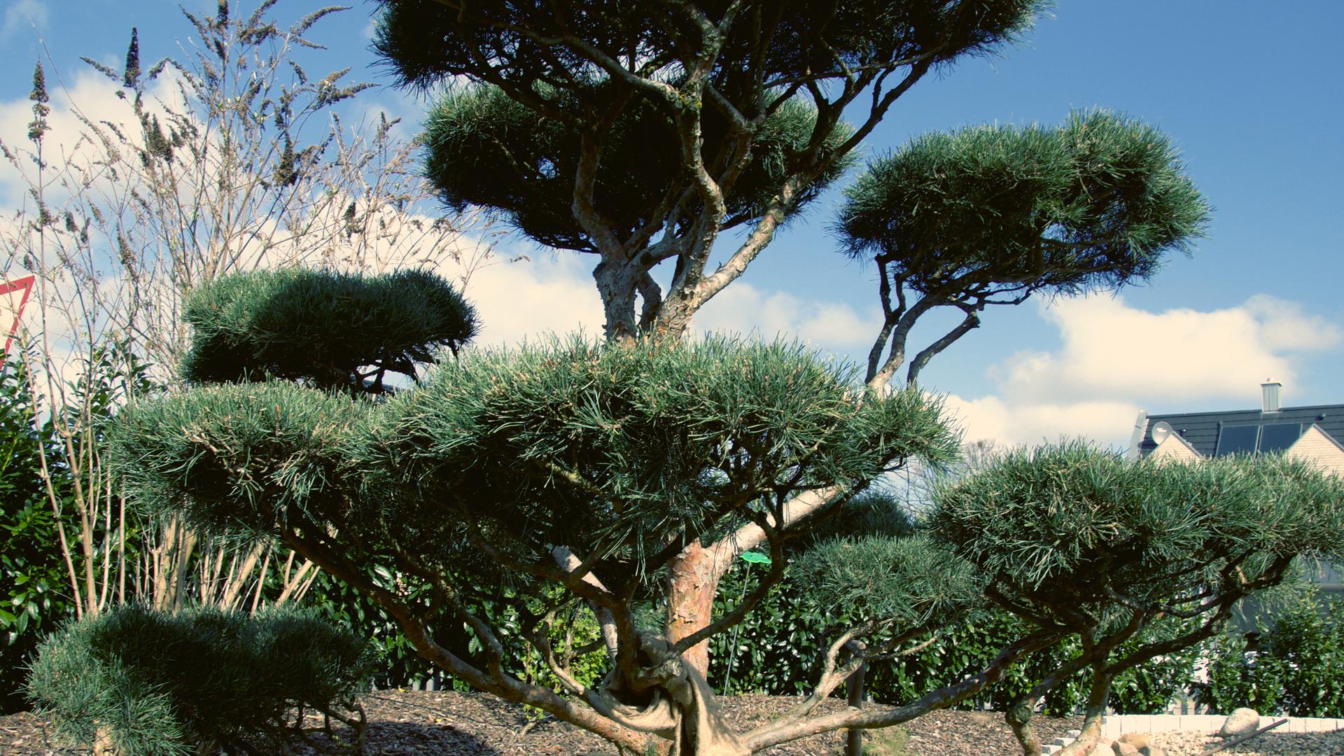 Sider_Baumpflanzung_2