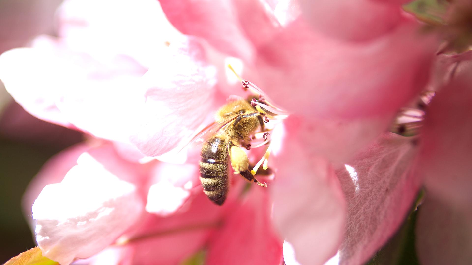 Sider_Bienenbeete